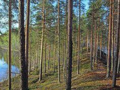 Leivonmäki National Park. Photo: Mikael Hintze