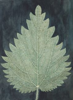 christine odlund Urtica Dioica, 2013 / Gouache and pencil on paper/ x 53 cm / photo: Jean-Baptiste Beranger Space Matters, Leafy Plants, Leaf Illustration, Color Stories, Tag Art, Herbalism, Plant Leaves, Drawings, Green