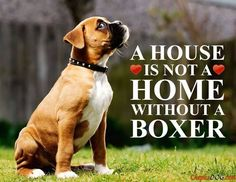 So true! #dogs #pets #Boxers Facebook.com/sodoggonefunny www.ALocket2Love.OrigamiOwl.com