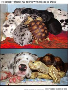 Rescued Tortoise Cuddling With Rescued Dogs