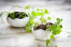 How-To: Mini Oven Bake Clay Planters and Bowls