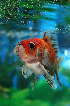 Fish by cgeneramos, via Flickr