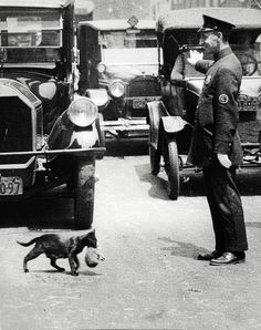 July 29, 1925. Harry Warnecke, a photographer for the New York News, got a phone tip that a cat trying to carry its kittens home was tying up traffic because a policeman had stopped the cars on a busy street (Centre Street) to allow it to cross.