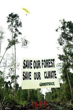 """22 October 2007 Riau Province, Sumatra. Greenpeace hang a 10m x 12m banner """"Save our forest, save our climate"""" on the remaining forest adjacent to an encroaching oil palm plantation in Indragiri Hulu, Riau Province to shine a spotlight on the ongoing destruction of peatlands forests in Indonesia.    Greenpeace paramotor pilot Cedar Anderson flys overhead. The paramotors are part of an ongoing aerial initiative to spot fires."""