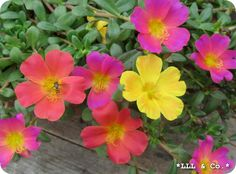Flowers... Beautiful mixed colours
