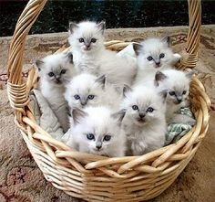 Katie's Kitties: Spring is For Babies (especially adorable kittens!)