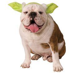 Pet Star Wars Yoda Costume Headpiece, Multicolor