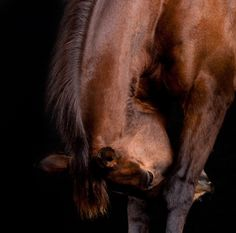 Equine by Peter Samuels