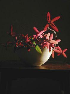 Ikebana by Atsuhi, Japan