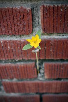 brick flower
