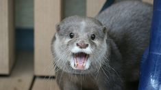 Otter looks so happy to see you! - October 23, 2017