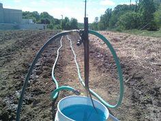 My fertilizer siphon (hozon) set up to fertilize transplanted vegetables.