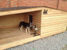 Cauti Cusca Caine - Aici gasesti totul despre cotet caine... Animal House, Architecture, Shed, House Design, Puppies, Pets, Kennel Ideas, Dog, Home Decor
