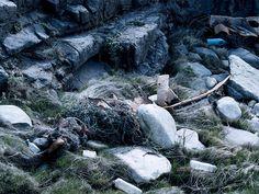 Quiberon #nature #waste