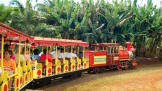 """Pineapple Express train rides are available at the <a href=""""http://www.dole-plantation.com"""" target=""""_blank"""">Dole Plantation </a>in Wahiawa, on Oahu."""