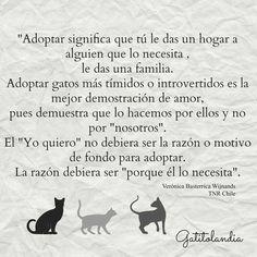 """""""Adoptar significa que tú le das un hogar a alguien que lo necesita, le das una familia.  Adoptar gatos más tímidos o introvertidos es la mejor demostración de amor, pues demuestra que lo hacemos por ellos y no por """"nosotros"""".  El """"Yo quiero"""" no debiera ser la razón o motivo de fondo para adoptar. La razón debiera ser """"porque él lo necesita"""".  Verónica Basterrica.   #AdoptaUnGatoAdulto #AdoptaEnPares #AdoptaAmor"""