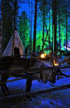 Reindeer in Santa Claus Village in Rovaniemi, Finland. Read more: Holidays Around The World, Around The Worlds, Santa Claus Village, Places To Travel, Places To Visit, Lapland Finland, Finland Trip, Arctic Circle, Europe