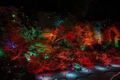 Butchart Gardens, just outside of Victoria Canada, for their 12 Days of Christmas themed holiday lights.