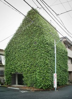 Photograph of a fantastic residential house in Tokyo, Japan completely covered in a natural green facade / captured by Guen-K . Green Architecture, Landscape Architecture, Architecture Design, Installation Architecture, Building Architecture, Pavilion Architecture, Sustainable Architecture, Residential Architecture, Contemporary Architecture