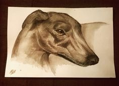 Jessie the Greyhound