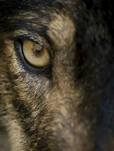 96 Best Wolves images in 2019   Wolf, Animals, Wolf quotes