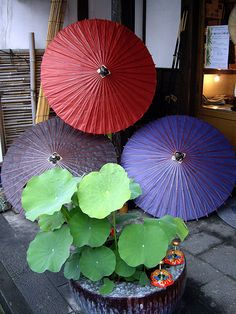 Japanese umbrellas ... This may not be art in the classic sense but the composition is.