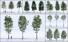 18 Free 3D Trees / Birch - Ronen Bekerman 3d architectural visualization blog