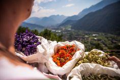 Colore e benessere con le erbe officinali -Farbe und Wohlbefinden mit den Heilkräutern (Roncegno Terme)