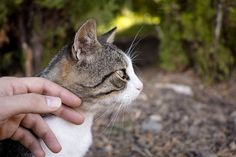 Cats, Wordpress, Animals, Blog, Pet Dogs, The Great Outdoors, Animales, Gatos, Animaux