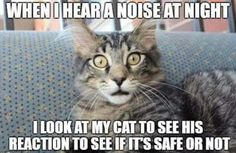 Our kitty cat is so brave, he always rushes toward the sound to make sure my husband and I are safe, and then returns triumphant to assure us everything is safe on his watch. 😊