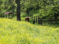 Sumner County Tennessee countryside