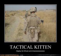 Tactical kitten