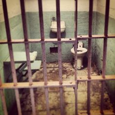 Tour Alcatraz #sf #travel