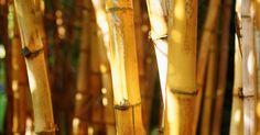 Cómo hacer manualidades y decoración de bambú para tu hogar