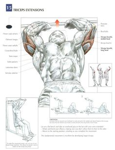Best triceps workouts for mass and definition - Bodybuilding Wokouts for You - Healthy Life 7 Workout, Triceps Workout, Gym Workouts, Workout Fitness, Sport Fitness, Muscle Fitness, Health Fitness, Fitness Bodybuilding, Biceps And Triceps