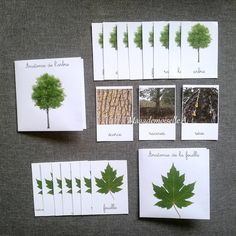 Petite Section, Christmas Diy, Homeschool, Activities, Explorer, Image, Recherche Google, Printables, Tree Identification