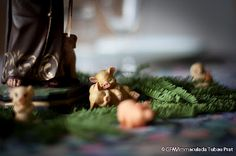 Fotografia al www.fotodiari.cat