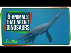 5 things you thought were dinosaurs but aren't - The Week