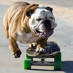 skateboarding doggy :)