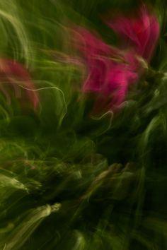 Rose von Jeannette-Fotokunst