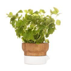 Modern Herb Planter