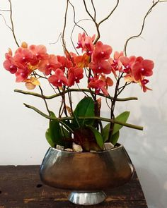 Fabulous orchids for the Cambria booth for the Roger's Cup. #flowers #design #Toronto #photography #flowerstagram #lindengrove #corktown #distillery #beautiful #contemporary #orchids #torontoflorists #smallbusiness #supportlocal #cambriagallery #cambriacanada #rogerscup