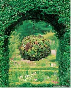 garden ideas, balls, kiss ball, hanging plants, succul ball, hen, hanging baskets, hang succul, hanging gardens