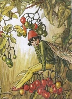 The Nightshade Berry Fairy. Vintage flower fairy art by Cicely Mary Barker. Taken from 'Flower Fairies of the Autumn'. Click through to the link to see the accompanying poem. Cicely Mary Barker, Nightshade Flower, Flower Fairies Books, Kobold, Fairy Pictures, Vintage Fairies, Fantasy Illustration, Fairy Art, Magical Creatures