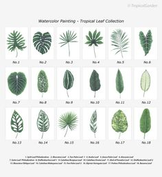 Tropical Leaf Print Set  Any FOUR Watercolor by TropicalGarden