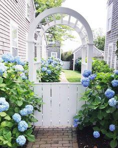 Hortensia Hydrangea, Blue Hydrangea, Hydrangeas, Hydrangea Garden, White Gardens, Garden Gates, Summer Flowers, Dream Garden, Garden Inspiration