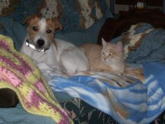 Our Pet of the Month for April is adorable and full of energy! http://www.pawsforreaction.com/petofthemonthapril2013.html