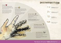 Human Decomposition Infographic on Behance Book Writing Tips, Writing Resources, Writing Help, Writing Prompts, Forensic Psychology, Forensic Science, Forensische Anthropologie, Human Decomposition, Forensic Anthropology