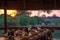 Savuti Camp has had a stylish revamp to its main deck, lounge and guest tents. No change to the amazing wildlife sightings though, as epic as ever. Africa Travel, Us Travel, South Africa Safari, Tents, Wilderness, Wildlife, Traveling, Deck, Lounge
