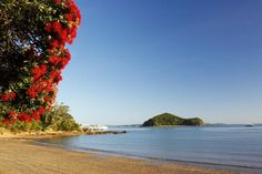 Bay of Islands Image - Pohutukawa Tree, Bay of Islands - Lonely Planet Bay Of Islands, Turquoise Water, Lonely Planet, Trees To Plant, Art Images, Kayaking, New Zealand, Planets, Summertime